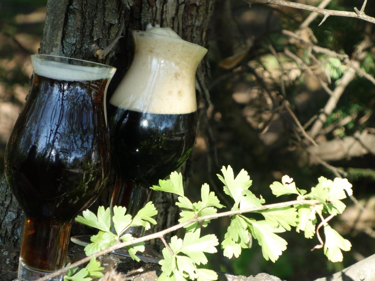 Das frischeste Bier Wiens